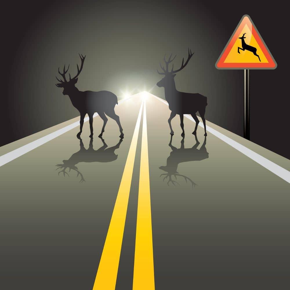 Gyvūnai kelyje ir kaip išvengti susidūrimo